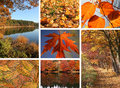 Collage of autumnal leaves   Stock Photo