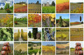 Collage with beautiful landscape of vineyards Stock Image