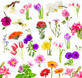 Collage of blooming flowers isolated on white background Stock Photo