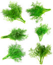 Collage  Bunch of dill on white . Isolated Royalty Free Stock Photography