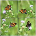 Collage with butterflies four photo of Royalty Free Stock Image