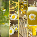 Collage with camomile Royalty Free Stock Photo