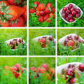 Collage of cherries and strawberry on green grass Royalty Free Stock Photography