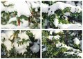 A collage of Christmas pictures. Beautiful winter background