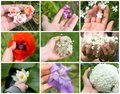 stock image of  Collage of colored spring flowers in hand of a young girl on the white background