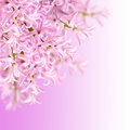 Collage of colors pink hyacinth Royalty Free Stock Photo
