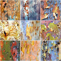 Collage of colorful Australian gumtree bark Royalty Free Stock Photo