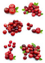 Collage from cranberry Royalty Free Stock Photography