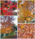 Collage d'automne Photos stock