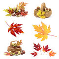 Collage from different autumn leaves and chestnuts on white background Royalty Free Stock Photos