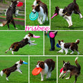Collage with dogs playing with frisbee funny disk outdoor Royalty Free Stock Image