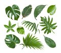 Collage of exotic plant green leaves isolated on white background Royalty Free Stock Photo