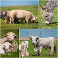 Collage of farming beautiful animals Stock Images