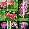 Collage of flower photos Stock Photo
