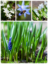 Collage of flowers different on the meadow Royalty Free Stock Images