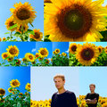 Collage of flowers of sunflower and young man in the field Royalty Free Stock Photo