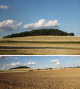 Collage of forest and field a a yellow hay Royalty Free Stock Photo