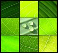 Collage green leafs water drops on black Royalty Free Stock Images