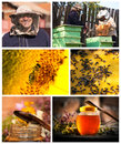 Collage honey farm for agriculture background Royalty Free Stock Images
