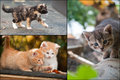 Collage of little kitten cute Royalty Free Stock Photos