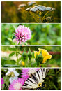 Collage nature banners summer flowers Royalty Free Stock Image