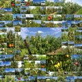 Collage orchards of apples and pears photo Royalty Free Stock Photo