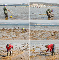 Collage people harvesting clams other bivalves sea coast Royalty Free Stock Images