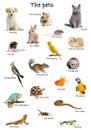 Koláž z domáce zvieratá a zvieratá v angličtine