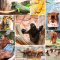 Collage photo of some wild animals zoo Stock Photo