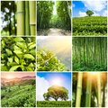 Collage of photos with bamboo forest and plantation Royalty Free Stock Photo