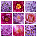 Collage of pink and purple flowers closeup Stock Photography