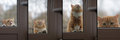 Collage portrait cat wants to come house, sad eyes look Royalty Free Stock Photo