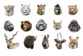 Collage of portraits of wild mammals on a white background isolated Royalty Free Stock Images