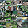 Collage of some wild animals Royalty Free Stock Photo