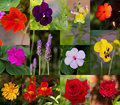 Collage of summer flowers in bloom different that Stock Photos