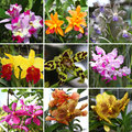A collage of various colorful and rare orchide flowers Royalty Free Stock Photography