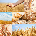 Collage wheat Royalty Free Stock Image