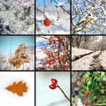 Collage with winter images from nature Stock Images