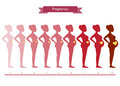 Collage of woman in pregnancy stages  on white , illustrations Royalty Free Stock Photo