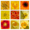 Collage of yellow and orange flowers close up Royalty Free Stock Image