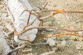 Collapsed reinforcement concrete structures with rusty steel bar Royalty Free Stock Photo