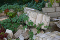 Collapsed wall from silicate bricks covered with climbing plants Stock Image