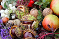 Collected autumn fruits on the table Royalty Free Stock Photo