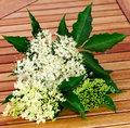 Collected elderflower on wooden table Stock Images