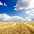 Collected harvest in windrows Royalty Free Stock Image