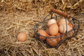 Collecting fresh farm eggs Royalty Free Stock Photo