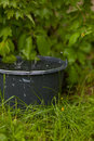Collecting rainwater into a overflowing bucket in the grass Royalty Free Stock Photo