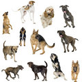 Collection of 12 dogs in different positions Stock Photo