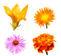 Collection of autumn flowers Royalty Free Stock Photo