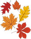 Collection of  autumn leave shapes Royalty Free Stock Images